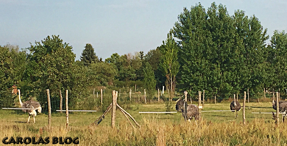 RK3-straussenfarm