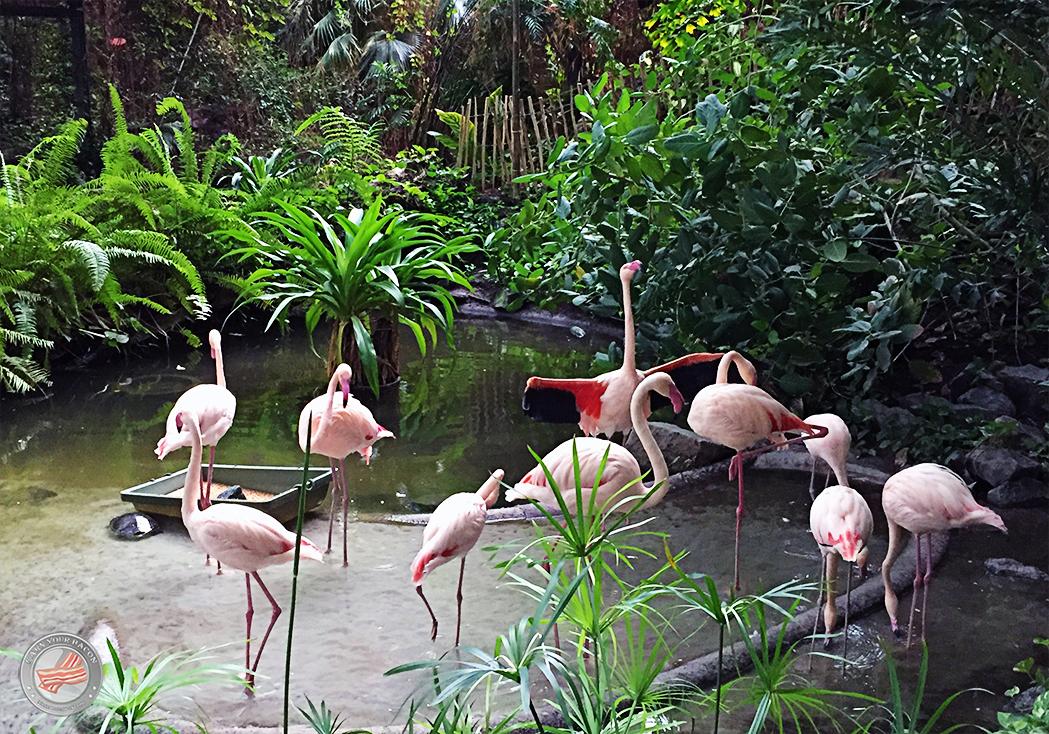 laufindietropen_flamingos