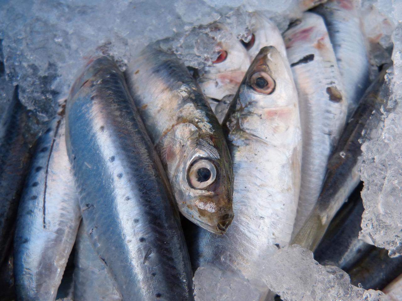 sardines-1106190_1280