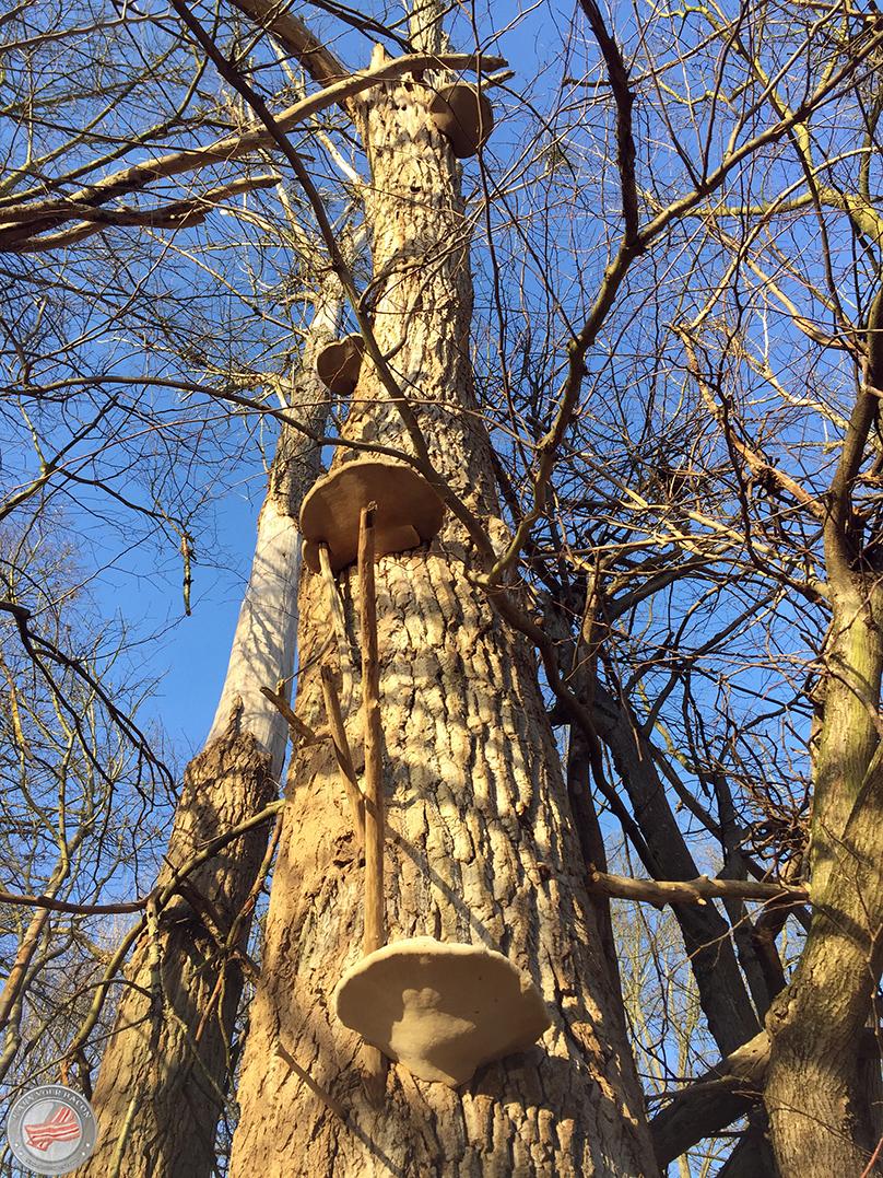 mammutmarsch training 4 Pilzbaum