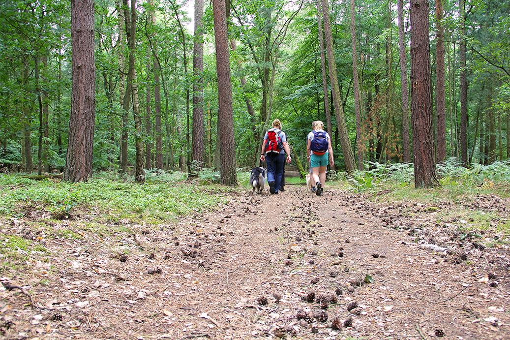 EYB-Wanderung Ab in den Wald