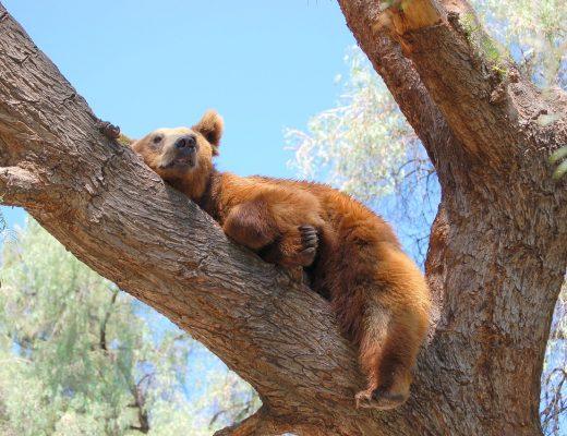 bear-1608433_1280